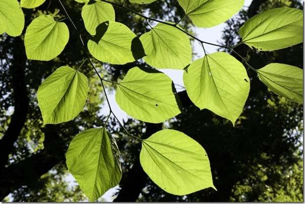 6-29-09-leaves
