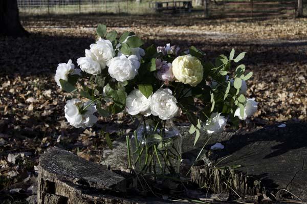 11-11-roses