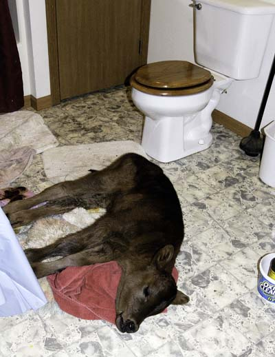 12-23-bathroomcalf