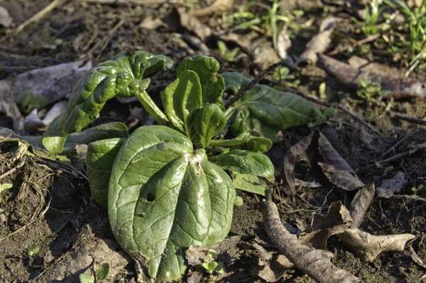 10-1-27-spinach