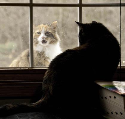 10-3-14-cats2