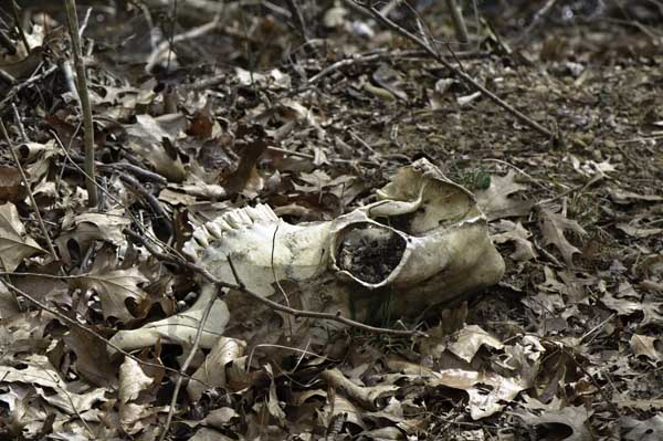 10-3-5-skull