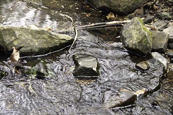 10-4-11-creek3