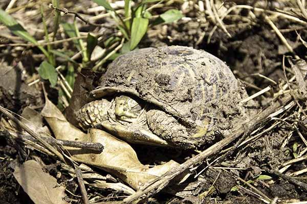 10-4-17-turtle2