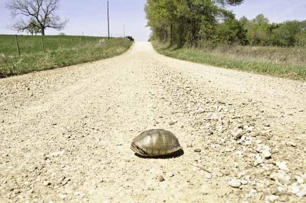 10-4-17-turtle3