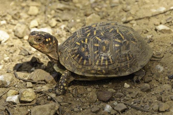 10-4-17-turtle4
