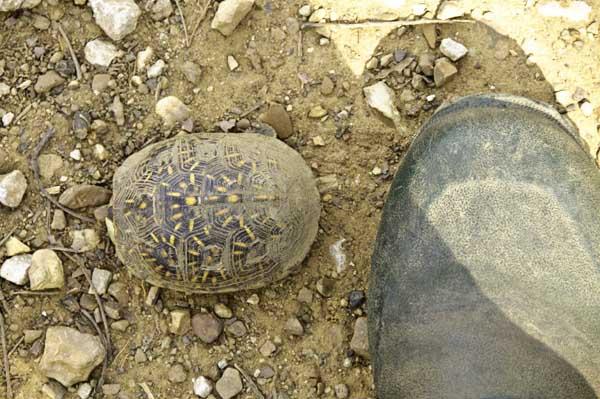 10-4-17-turtle5