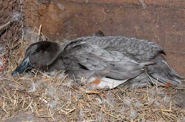 10-4-19-nest1