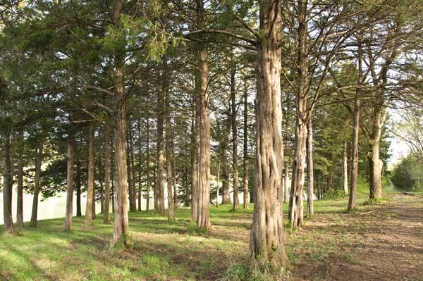 10-4-20-trees