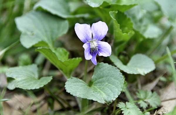 10-4-7-violet