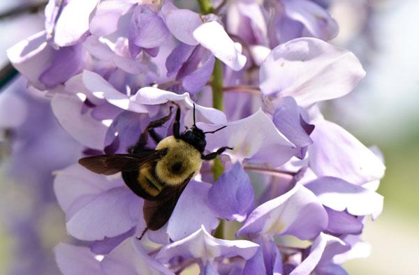 10-5-10-wisteria4