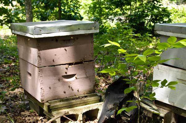 10-5-19-hive