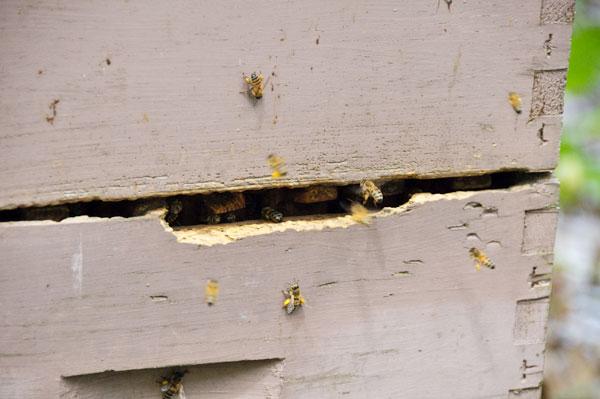 10-5-19-hive2