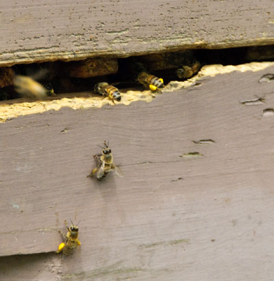 10-5-19-hive3