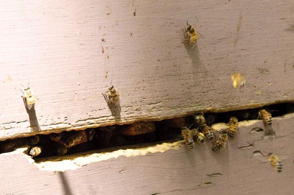 10-5-19-hive4