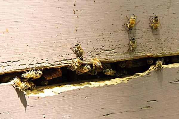 10-5-19-hive5