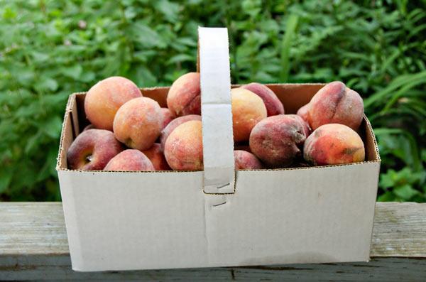 10-7-28-peach1