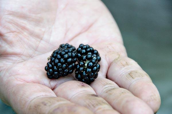 10-7-30-blackberry