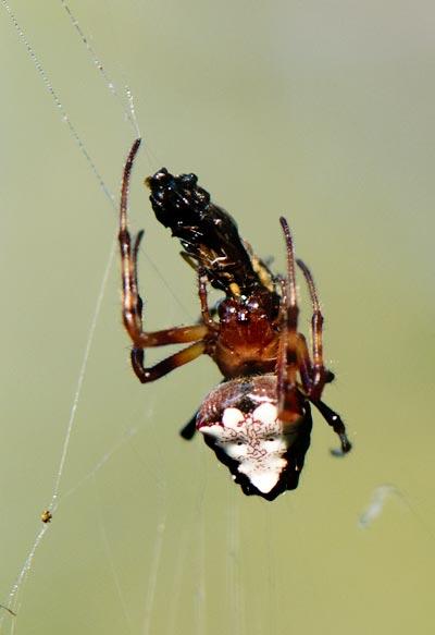 10-7-30-spider